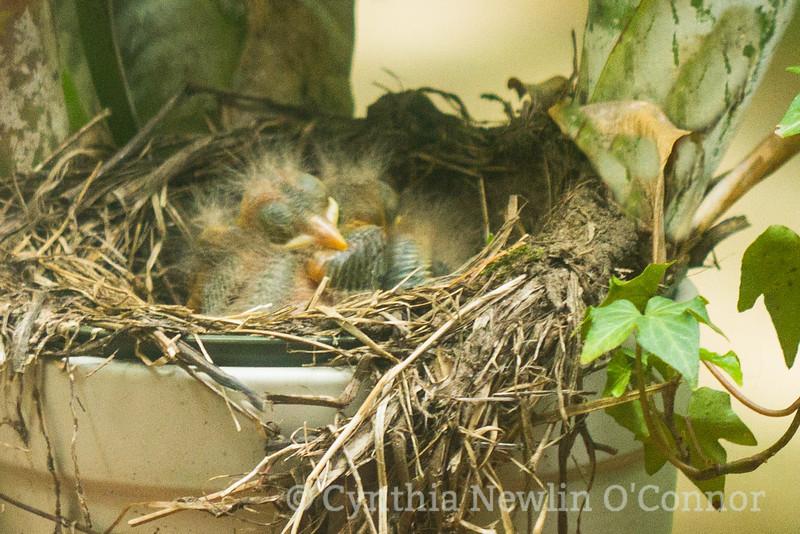 Fuzzy babies!