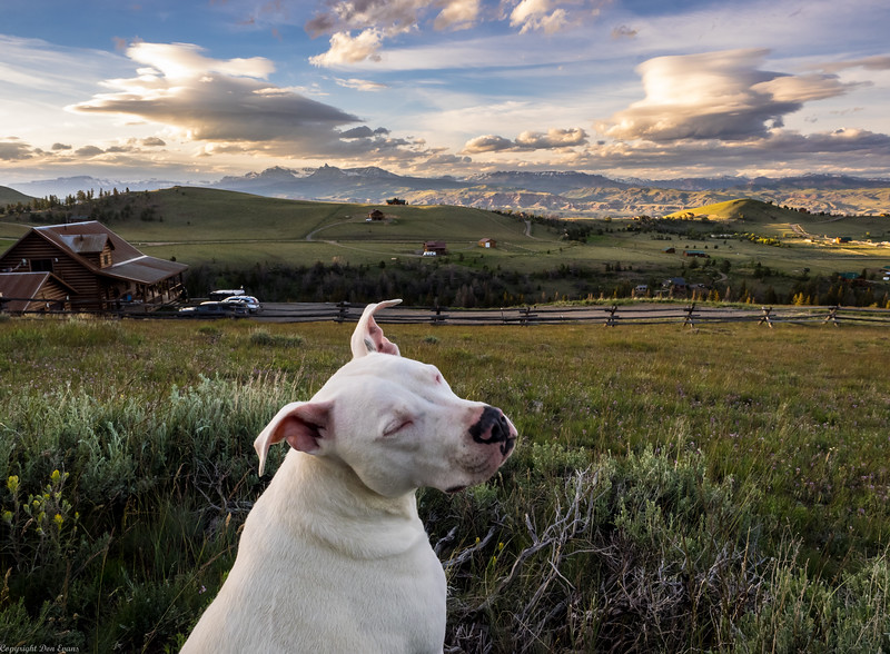 Pinki Joe admiring the scenery.