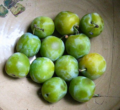 Sour plum | Unusual fruits from around the world