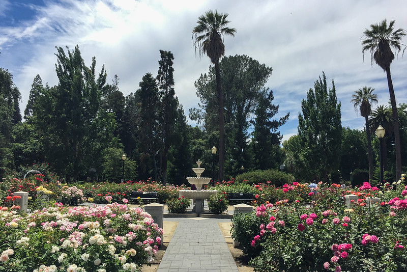 The Capitol Rose Garden in Sacramento, CA