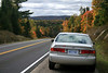 Camry and Foliage