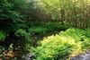MacKenzie King Estate - Ferny Pond