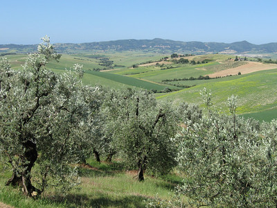 Day 3 Olive groves and rolling hills view from the ride