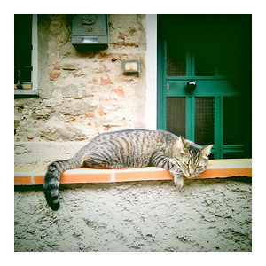 'Un gatto' modeling how to relax on vacation