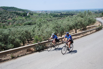 Bicycling past thousands of olive trees in southern Italy