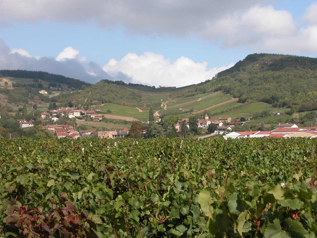 Vineyards in central France - around Macon - day 6