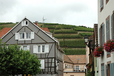 Vineyards on the outskirts of town in the heart of Alsatian wine country