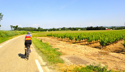 Day 2, riding past vineyards