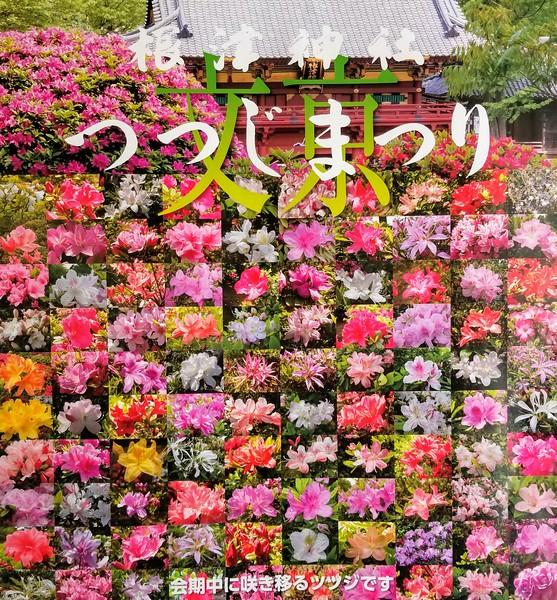 Varieties of Cherry Blossoms