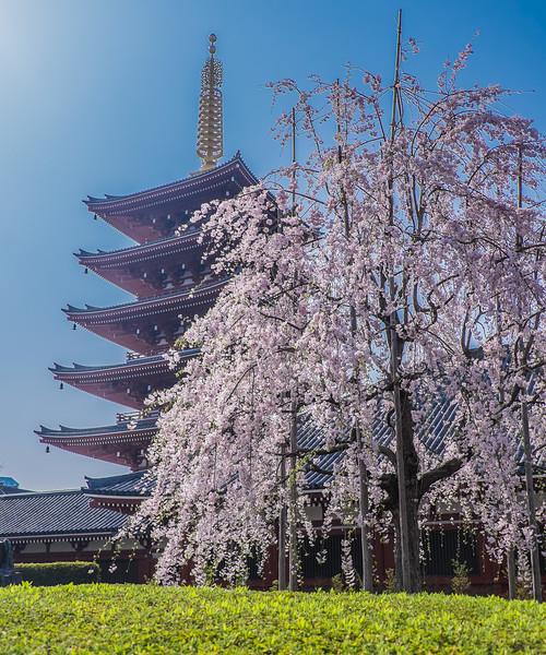 Sensi-Ji Pagoda