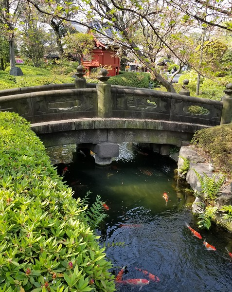 Stone bridge and koi
