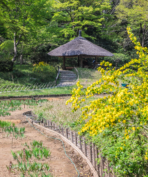 Iris (to be) garden