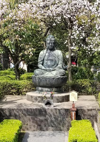 Buddha and Cherry Blossoms