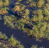 2019-09 Botswana Heli Flight Best (47 of 75)