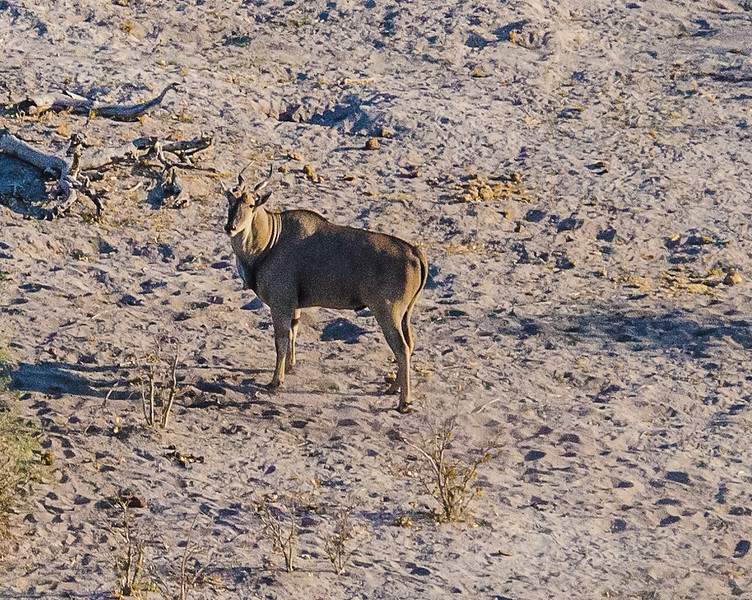 2019-09 Botswana Heli Flight Best (22 of 75)