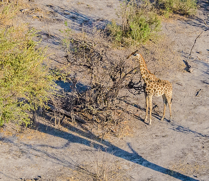 2019-09 Botswana Heli Flight Best (52 of 75)