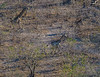 2019-09 Botswana Heli Flight Best (29 of 75)