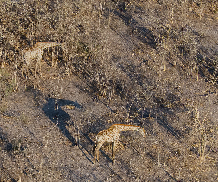 2019-09 Botswana Heli Flight Best (95 of 31)