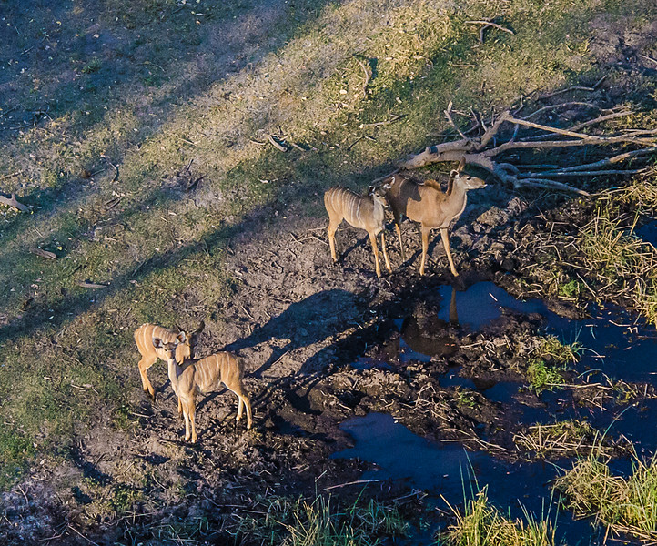 2019-09 Botswana Heli Flight Best (25 of 75)