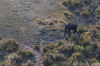 2019-09 Botswana Heli Flight Best (83 of 31)