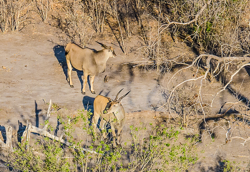 2019-09 Botswana Heli Flight Best (23 of 75)