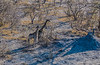 2019-09 Botswana Heli Flight Best (57 of 75)