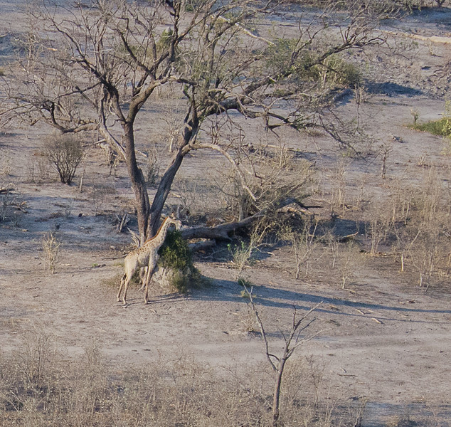 2019-09 Botswana Heli Flight Best (91 of 31)