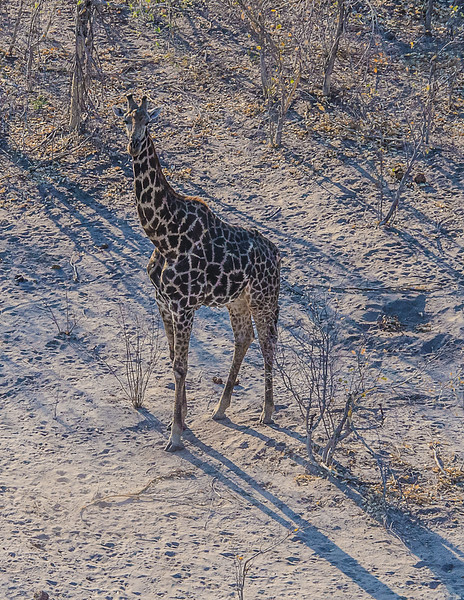 2019-09 Botswana Heli Flight Best (28 of 75)
