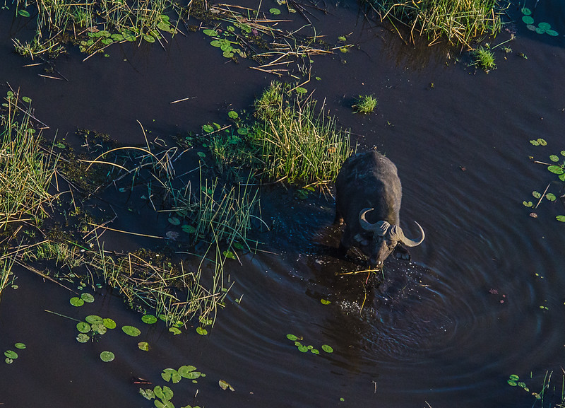 2019-09 Botswana Heli Flight Best (10 of 75)