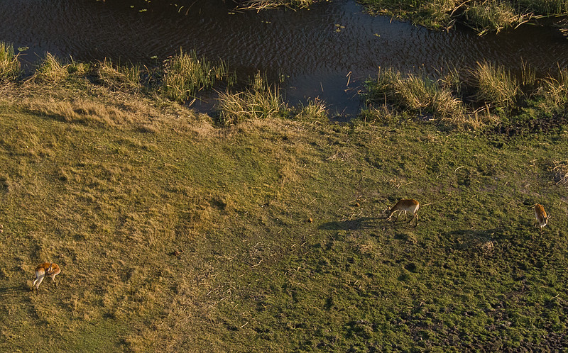 2019-09 Botswana Heli Flight Best (88 of 31)