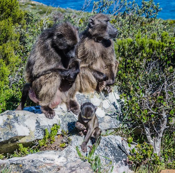 1452019-09 Capetown