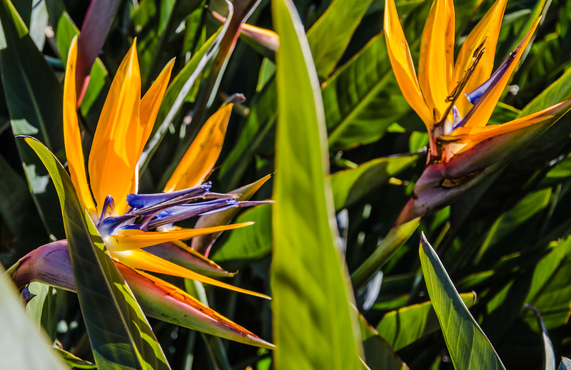 0512019-09 Capetown