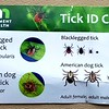 Warning! We found several hitchhiking wood ticks. ICK!
