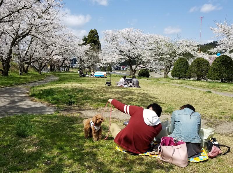 Pooch picnic