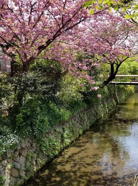 Kyoto Kulture