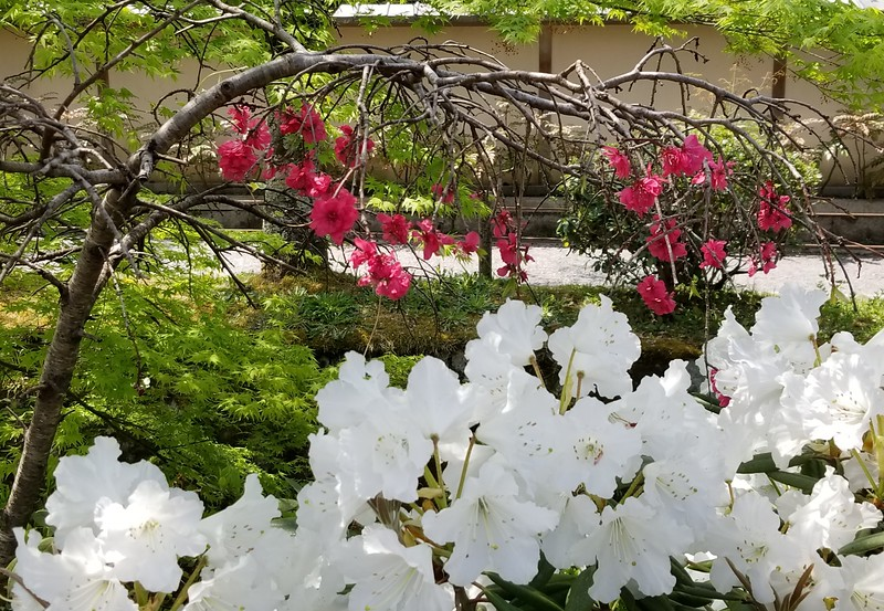 Lovely blooms along Philosopher's Walk