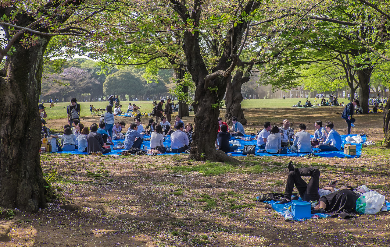 Hanami (blossom viewing) picnics