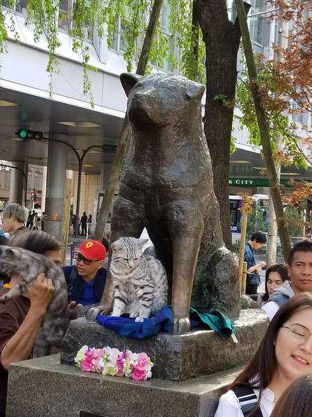 Hachiko statue - came to meet owner 10 yrs after death