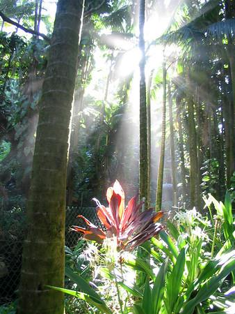 Big Island - National Botanical Garden