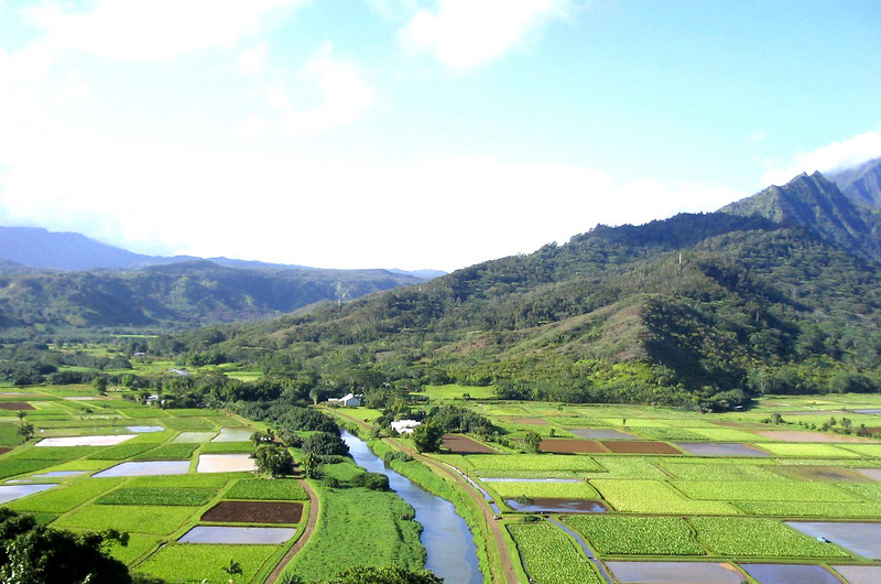 Toro fields in Kauai