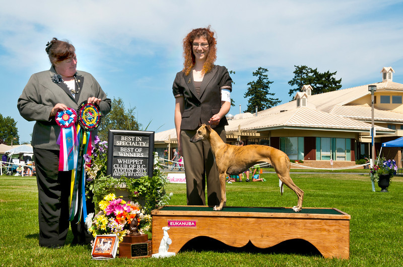 "Note: Pedigree is at the bottom of this page (download friendly).<br /> <br /> August 10, 2013 - ""Lumin"" wins the 2013 Whippet Club of BC Specialty and becomes a NEW Canadian Champion under Hound Specialist Judge Elrena Stadler, SA<br /> <br /> BISS Can CH Momentum's Rain over Redwoods FCHX (Am CH Morlais Sergeant Pepper x Loughren Cinnamon FCHX2)"