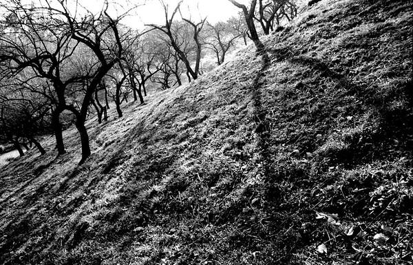 Plum Blossoms in Okutama Canon-Elan-7e_18