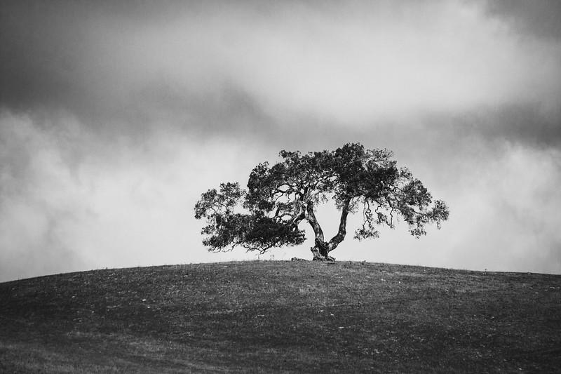 Distant Oak