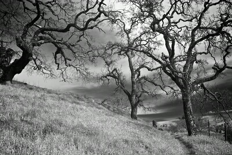 Eerie Trail