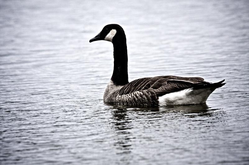 My Pond EOS40D-TMW-20100123-IMG_7318