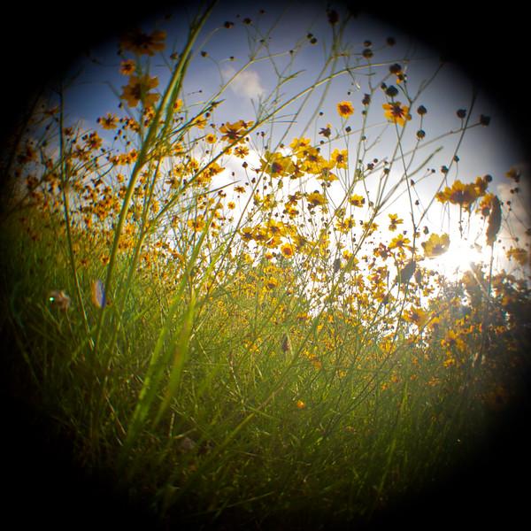 Fisheye Flowers