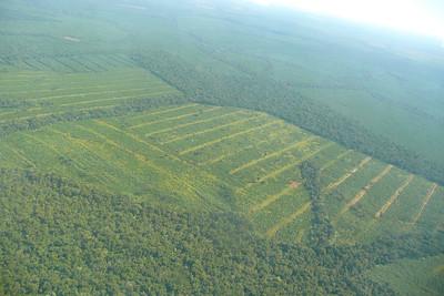 Green Tropical Forests in Northern Argentina near Iguazu