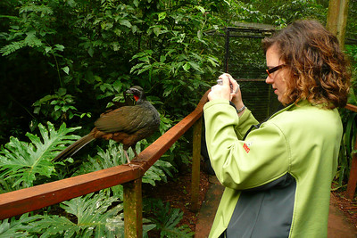 Sara trying to snap a photo of a bird (he was not cooperating!)