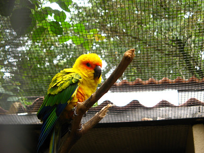 Brazil is home to lots of parrot breeds