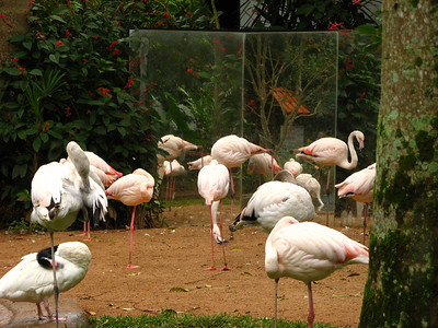 Flamingoes checking themselves out in the mirror